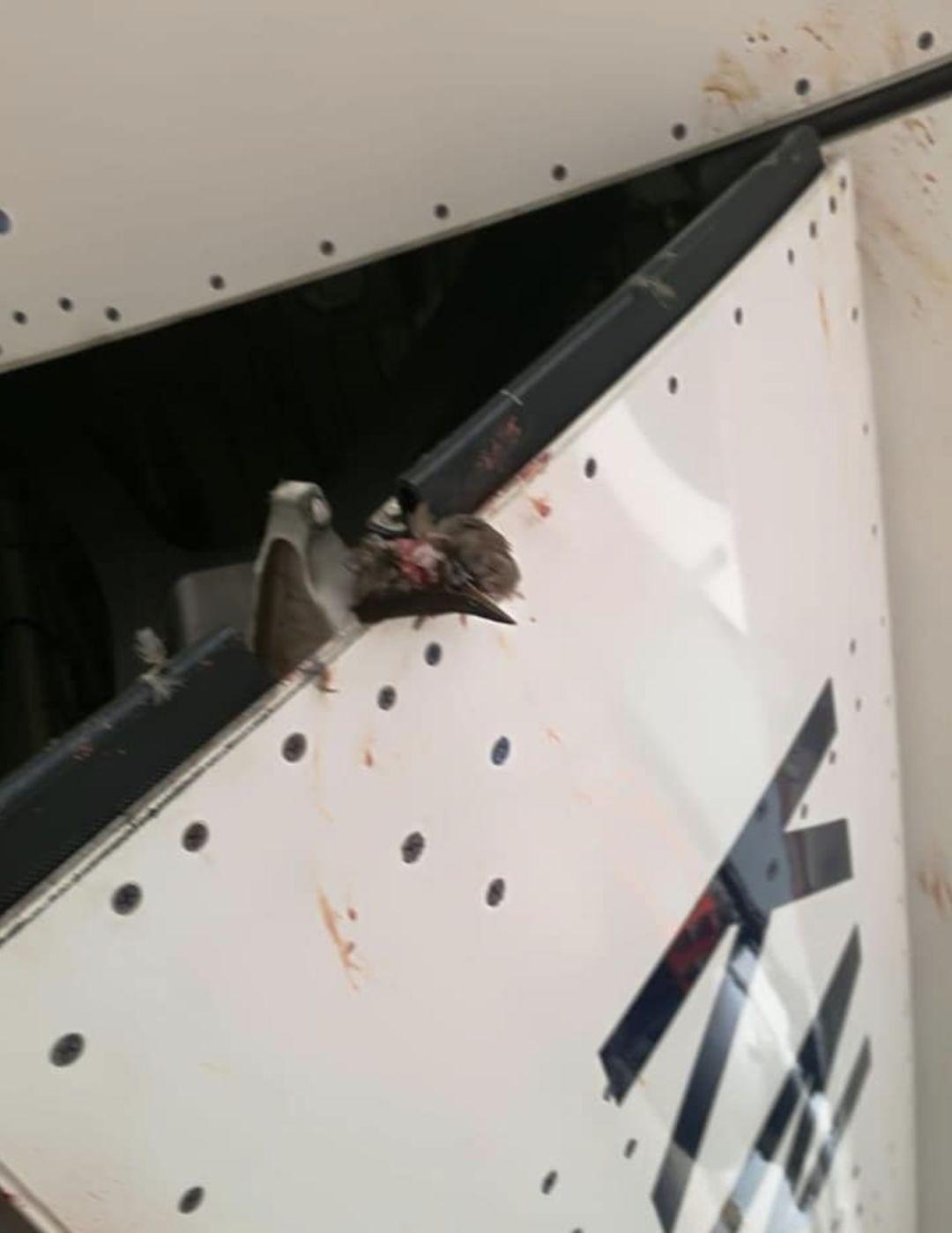 新航飞机撞上鸟群