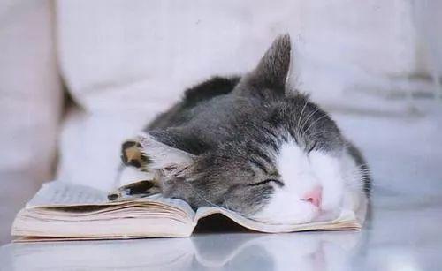 警惕!新加坡人世界第3缺觉,每天只睡......