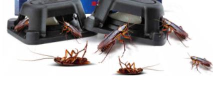 在新加坡生活,该怎么样才能抵御蟑螂入侵?