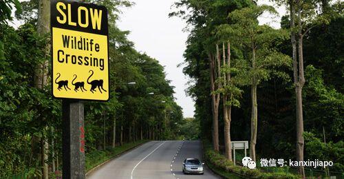 人类退散,新加坡的这座桥只有动物能走