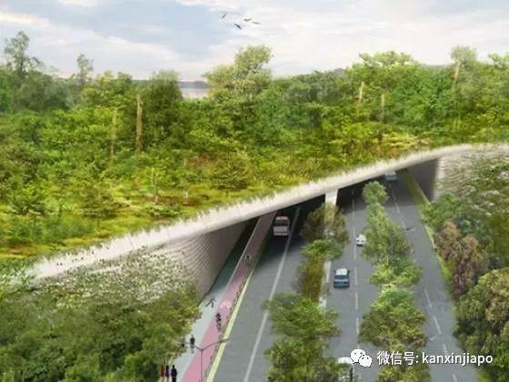 新加坡动物园、夜间动物园、河川生态园将成为历史!