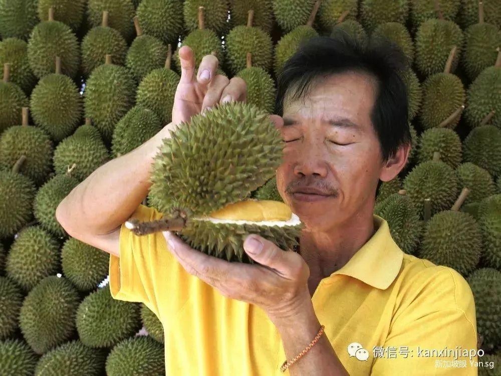 受疫情影响价格减半,马来西亚大批榴梿将涌入新加坡